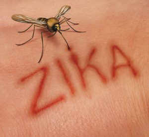 Zika disease concept as a virus risk symbol with a dangerous illness carrying mosquito forming text on human skin that represents the danger of transmitting infection through bug bites resulting in zika fever.